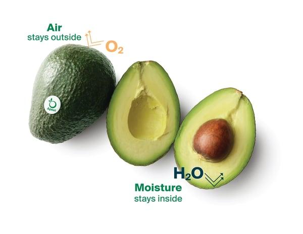 Avocado-Diagram-horizontal