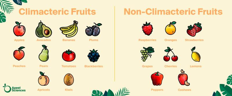 Climacteric-Fruit-2-1