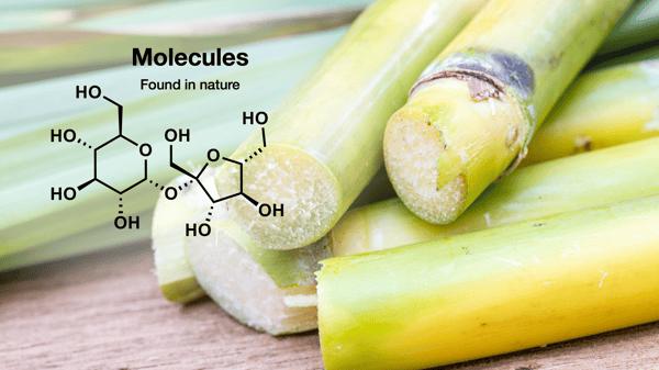 Sugarcane-2
