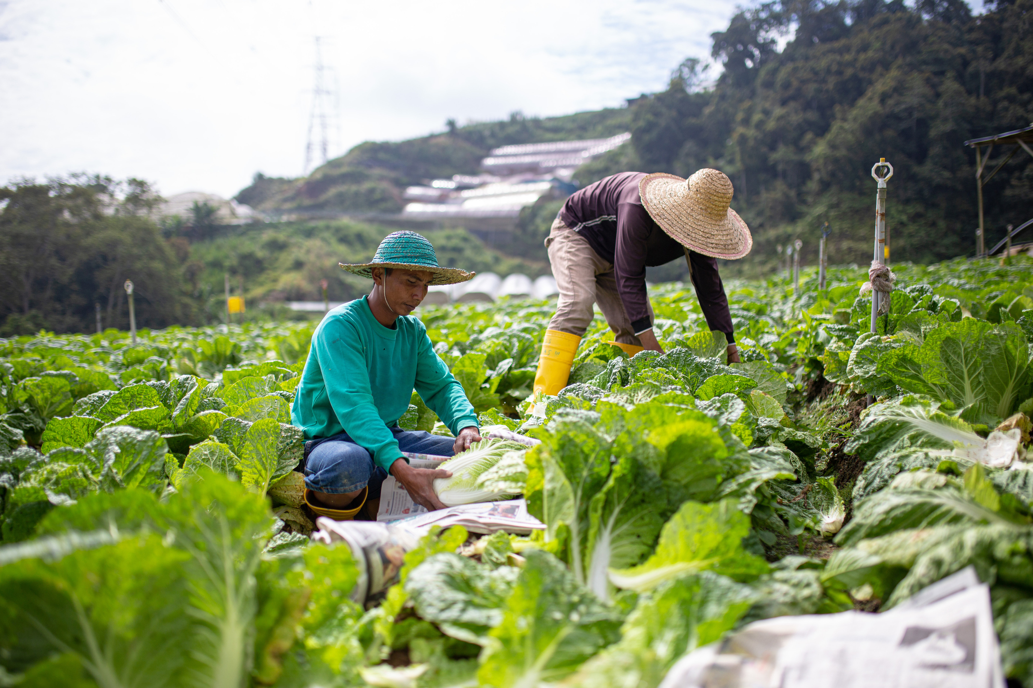 Sustainable food production at a local level