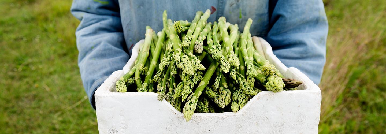 asparagusheader